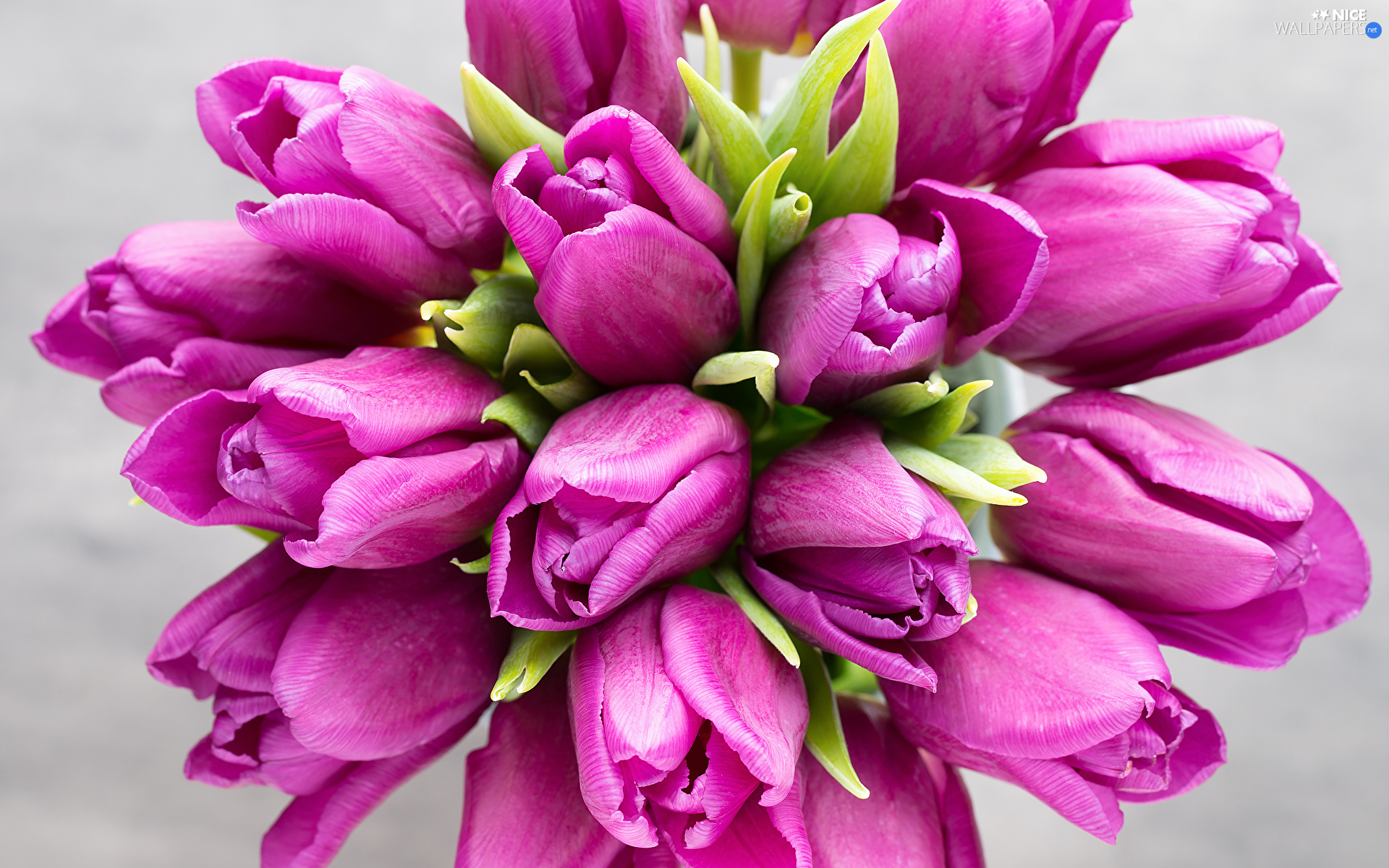 Flowers, dark pink, Tulips, bouquet