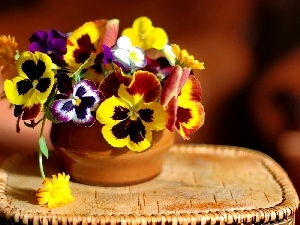 pansies, small bunch, Colorful