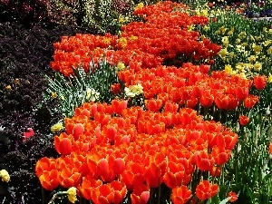 Orange, carpet, floral, Tulips