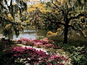 trees, viewes, Pond - car, Flowers, Park