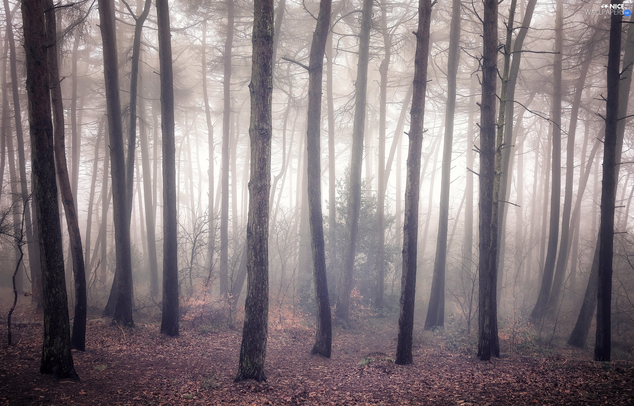 trees, forest, Fog, autumn, viewes, leafless