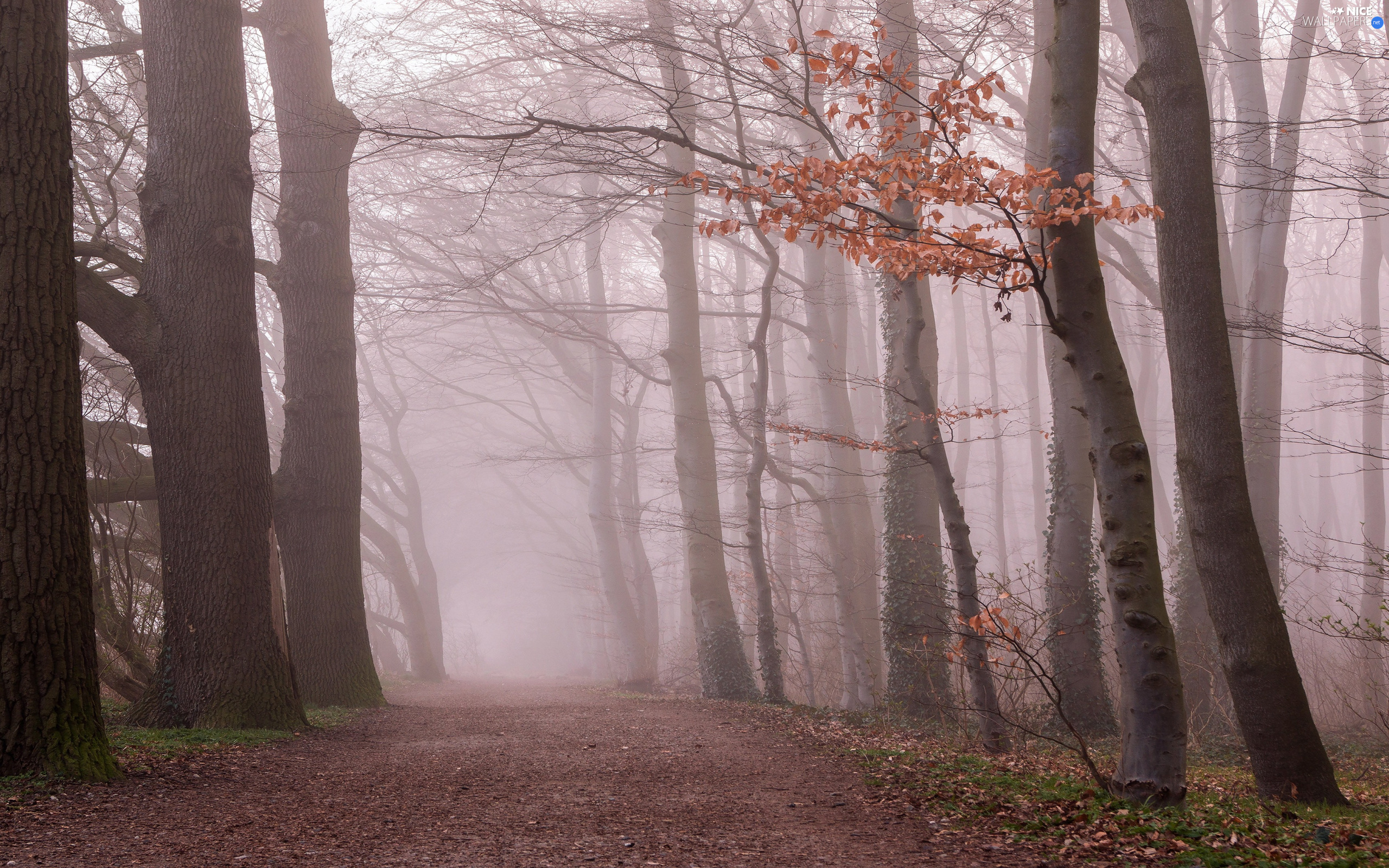 forest, autumn, trees, viewes, morning, Way, Fog, Leaf, branch pics