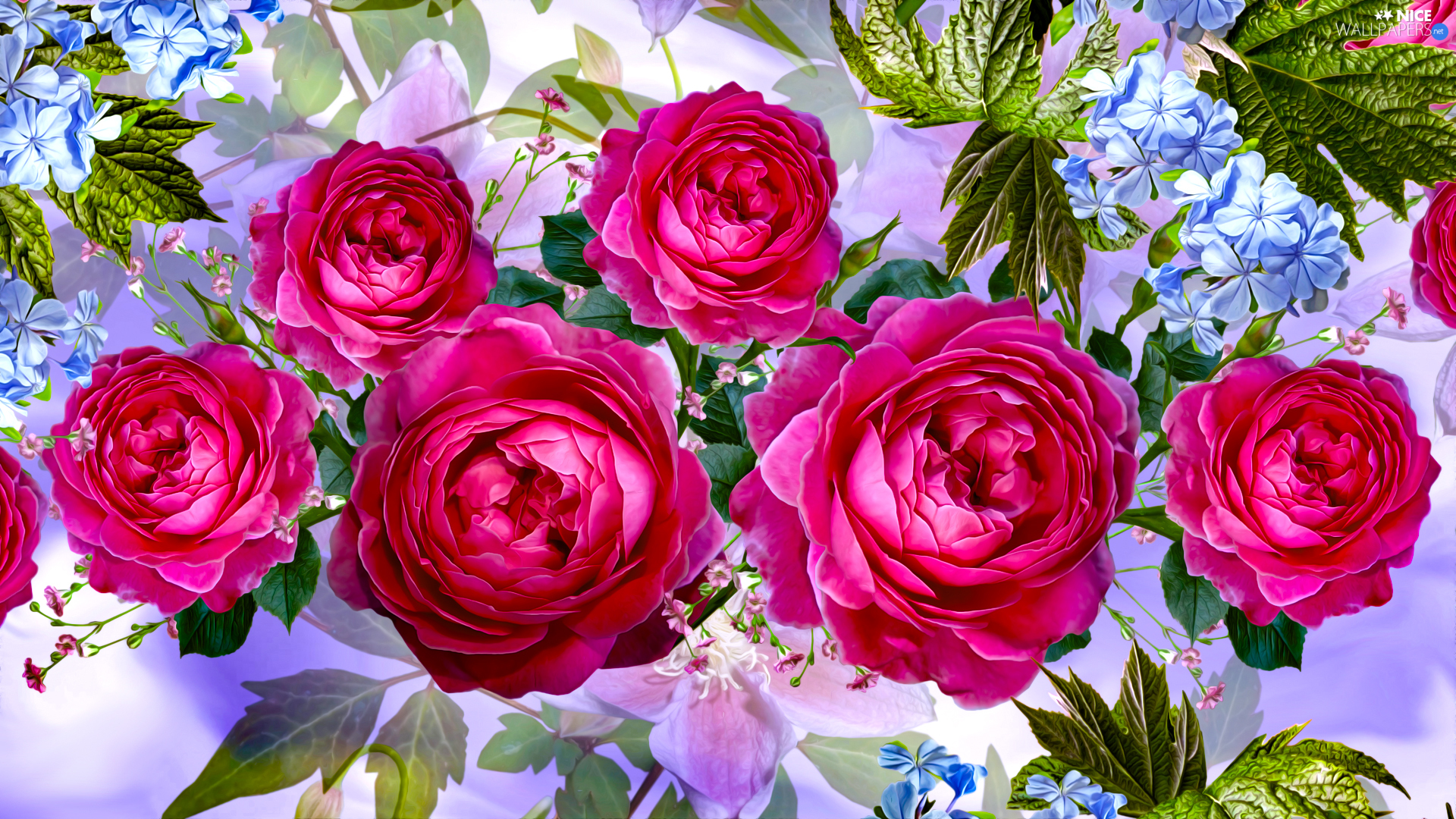 roses, graphics, developed, Pink, Flowers