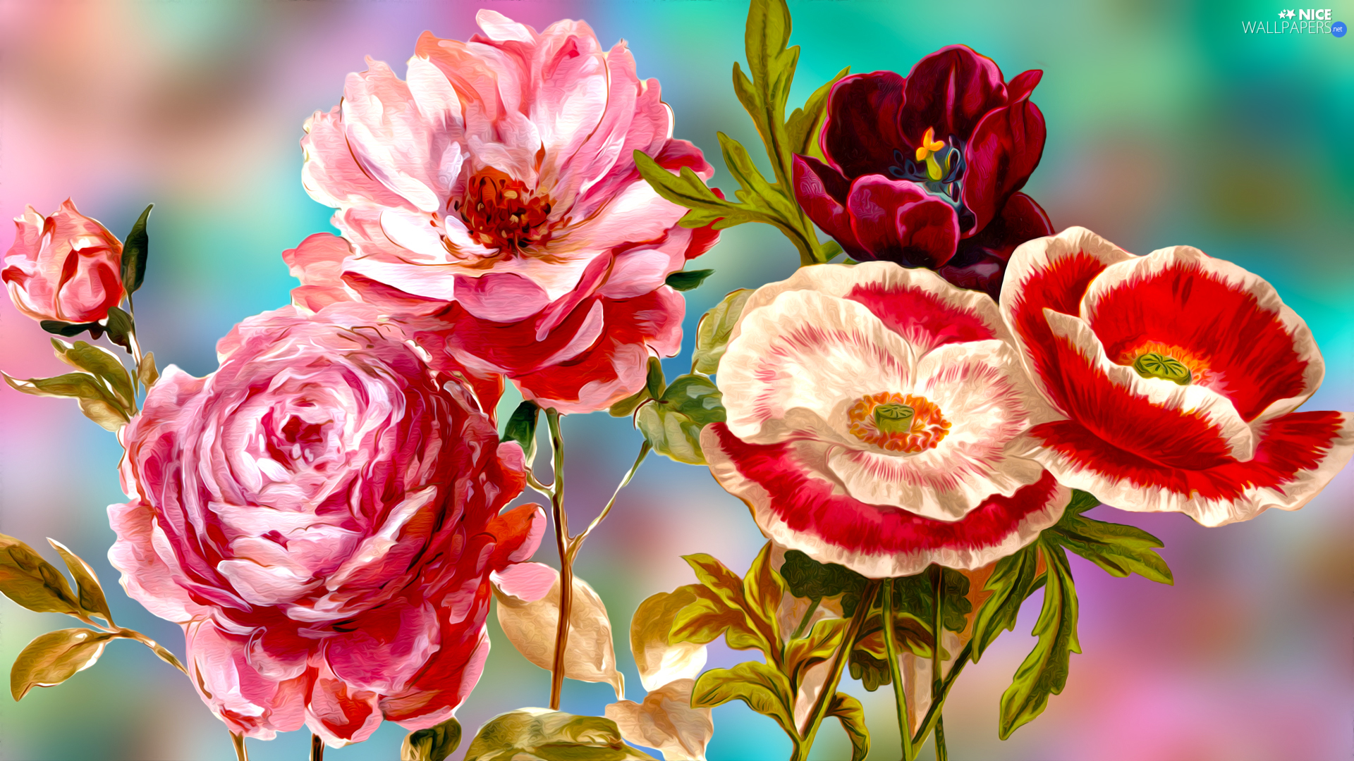 tulip, graphics, roses, papavers, Flowers