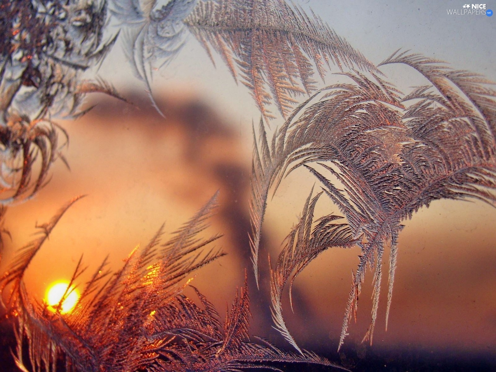 Frost, glass, Great Sunsets, an