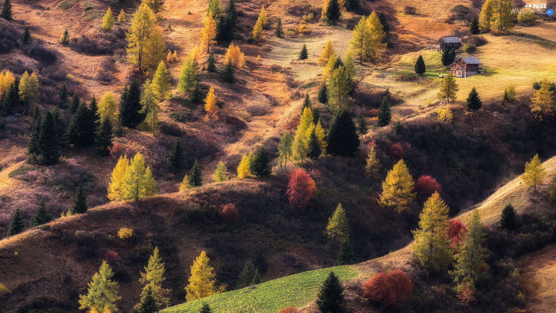 trees, autumn, Houses, hills, viewes, color