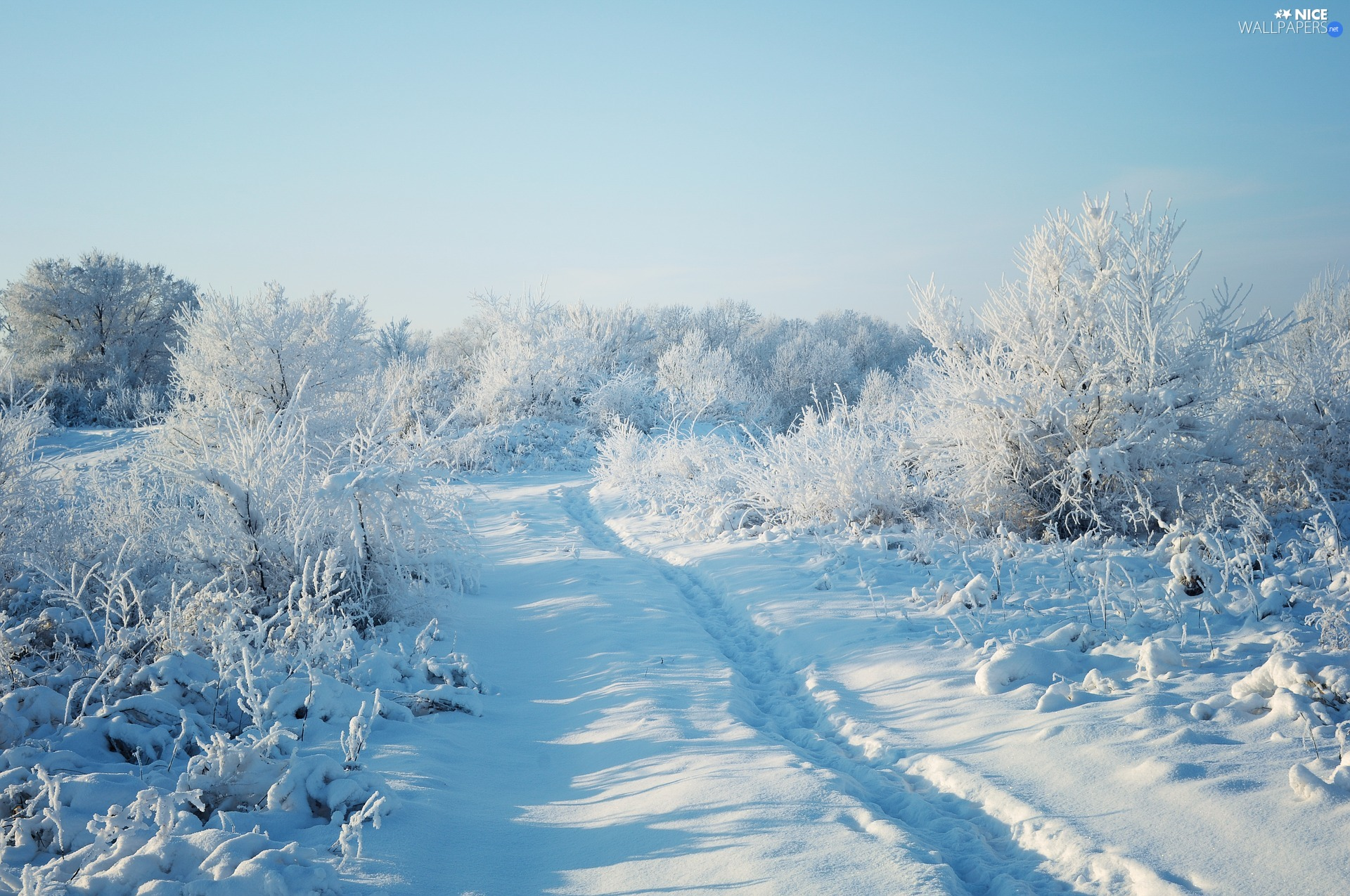 forest, snow, viewes, Path, winter, trees, Bush