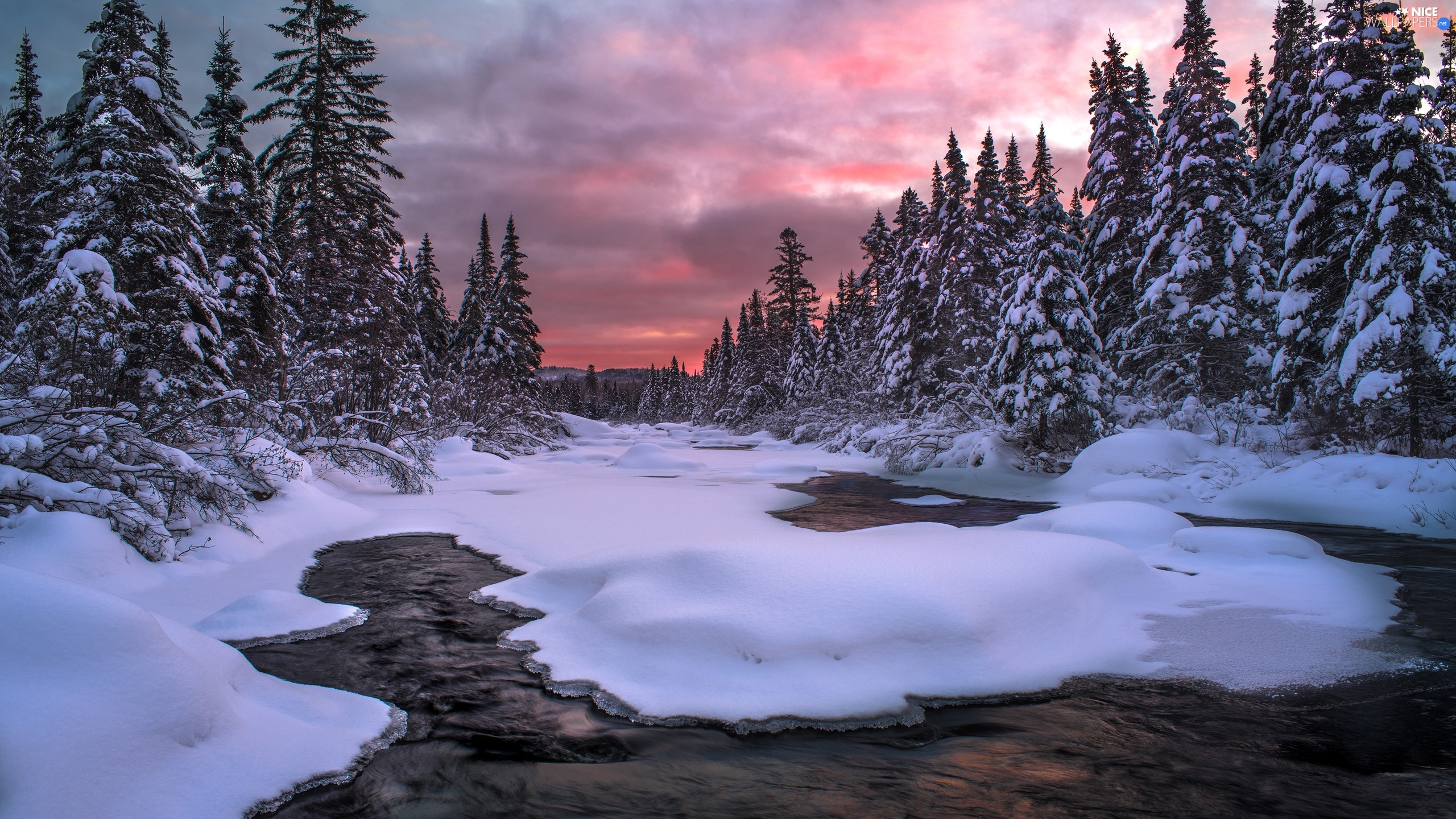 viewes, River, Spruces, trees, winter, Snowy, Great Sunsets