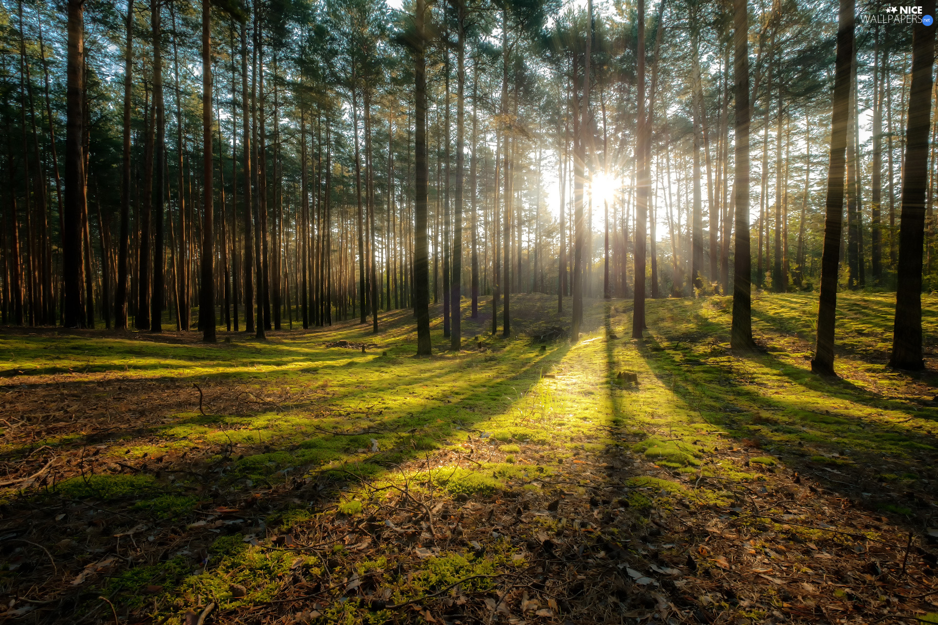 light breaking through sky, rays of the Sun, trees, viewes, forest