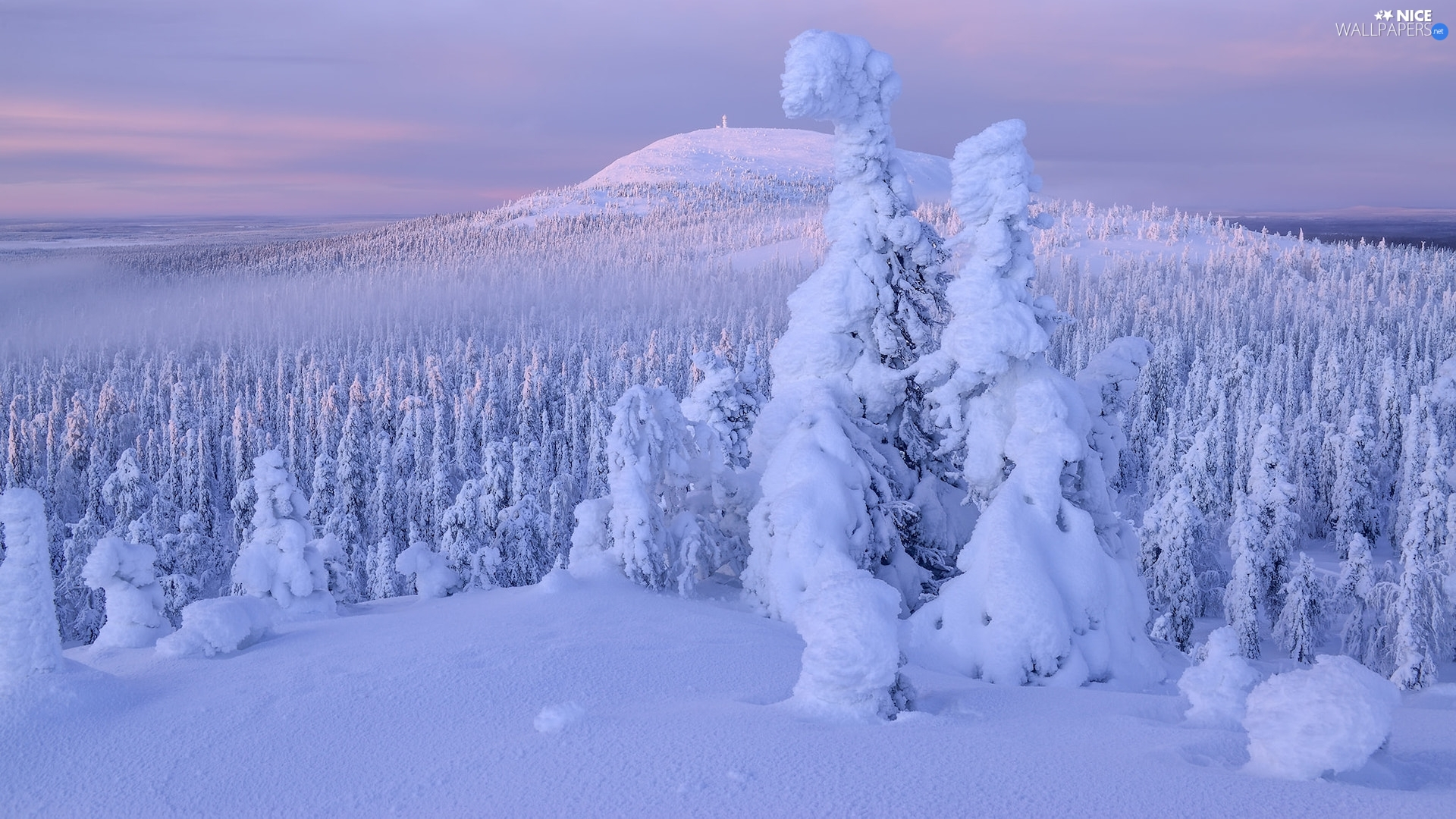 viewes, Snowy, drifts, trees, winter, Spruces, Hill