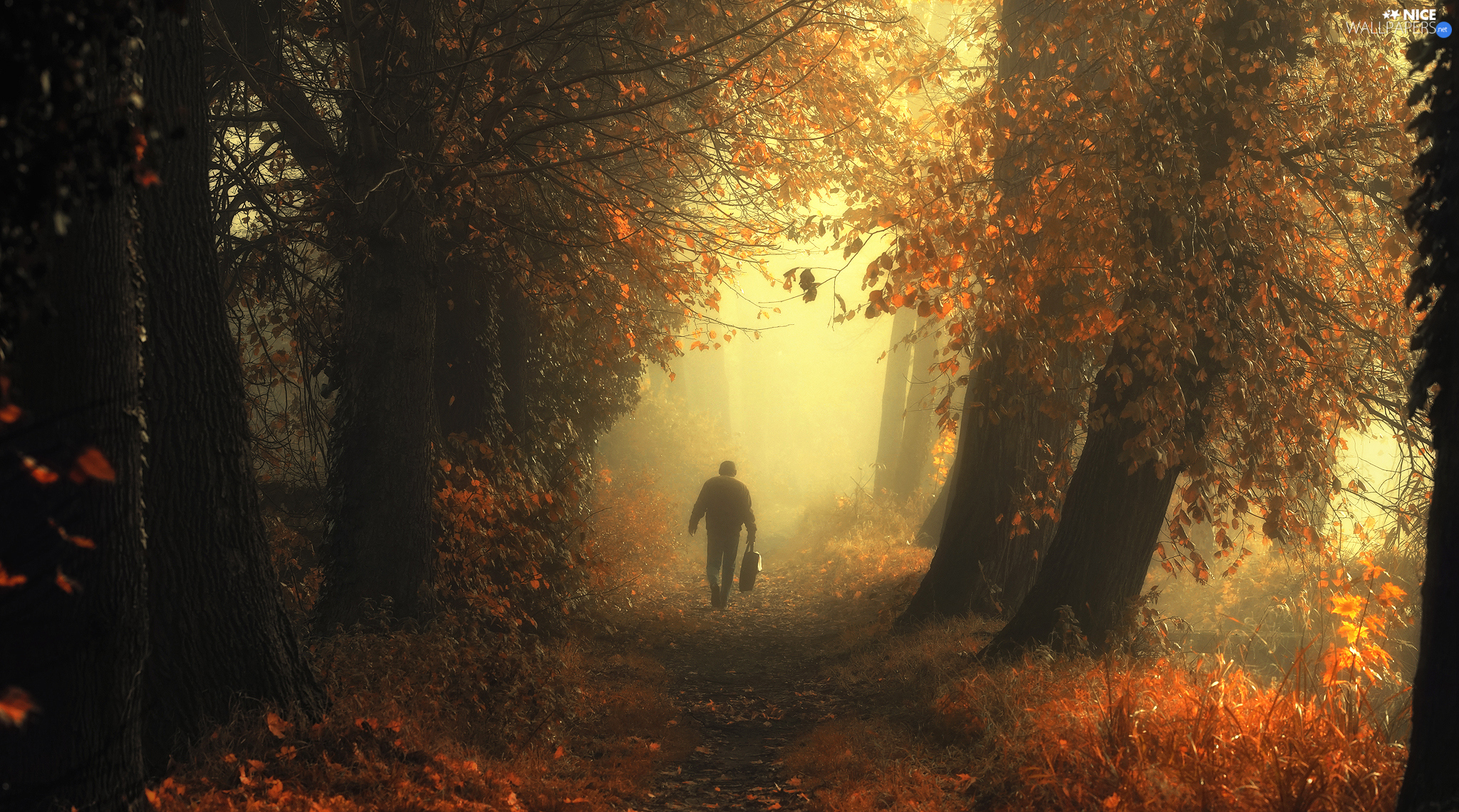viewes, forest, Fog, trees, autumn, Way, Human