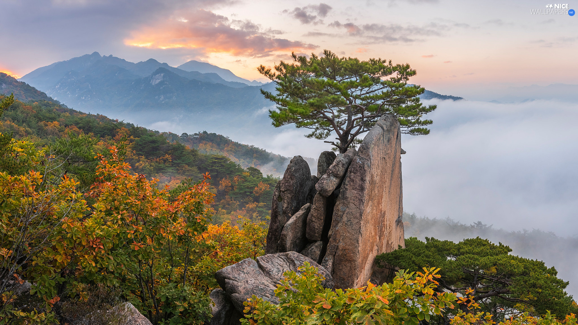 trees, Mountains, pine, Rocks, woods, autumn, Sky, clouds, Fog