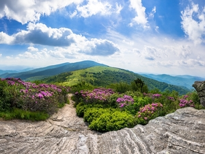 Tennessee State, Roan Mountain, rocks, Appalachian Mountains, Appalachian National Scenic Trail, The United States, Rhododendron