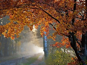 autumn, forest, Fog