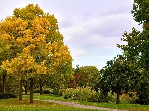 Park, viewes, autumn, trees