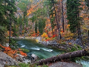 River, forest, autumn, rocks