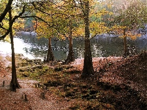 River, viewes, autumn, trees