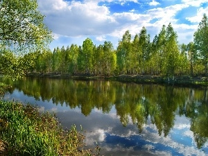 River, viewes, birch, trees