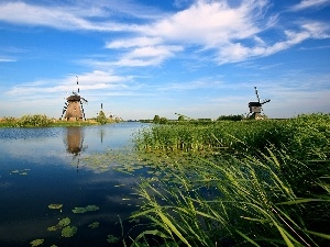 cane, Windmills, water