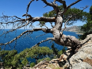 trees, sea, cliff, viewes