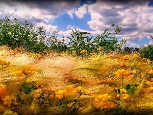 clouds, Flowers, grass