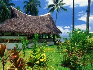 Cottage, Tropical, Palms