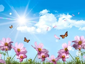 Flowers, Sky, butterflies
