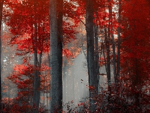 Fog, autumn, viewes, forest, trees