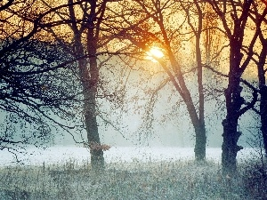dawn, frosted, forest, hazy