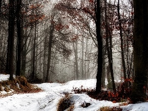 forest, Way, snow