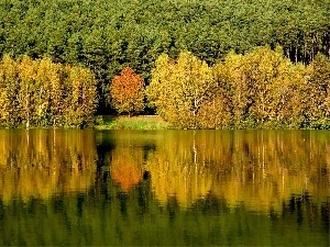 lake, reflection, trees, viewes, forest