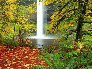 autumn, forest, Leaf, waterfall