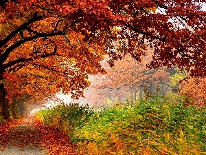 Leaf, lane, trees, viewes, color