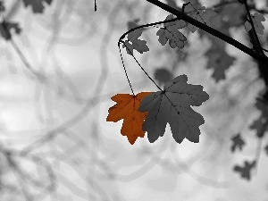Leaf, black, White