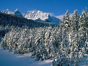 Mountains, winter, forest