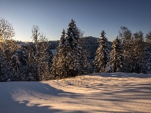 winter, viewes, rays of the Sun, trees