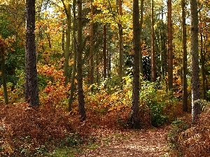 Path, autumn, forest