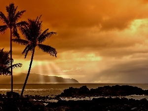 clouds, rays of the Sun, Palms, sea