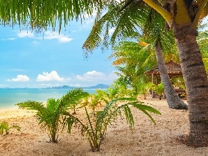 sea, Tropical, Palms, Home, Beaches