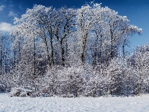 snow, winter, viewes, Bush, trees