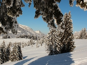 Snowy, Spruces, Mountains, woods, winter