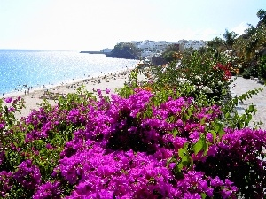 sea, Flowers, Spain, Beaches