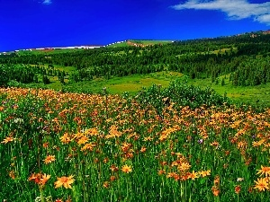 Meadow, Wildflowers, Spring Flowers