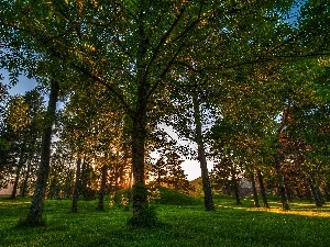 trees, Park, summer, viewes