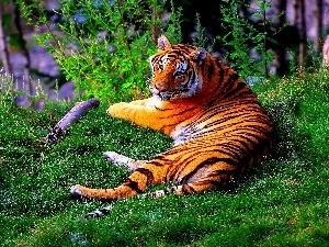 trees, lying, tiger, viewes