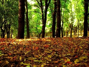 green ones, Leaf, viewes, autumn, color, trees, Park