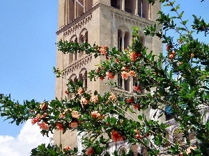 trees, tower, flourishing