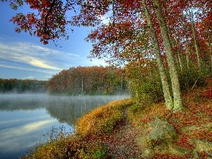 trees, viewes, lake, mist, autumn
