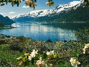 twig, lake, trees, viewes, blooming, Mountains