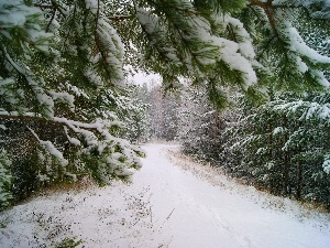 trees, viewes, Way, Snowy, forest